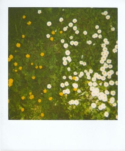 06 Macchie di primavera - G.F.G. Liminare_206 01052010.jpg