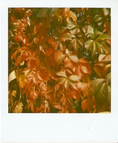 autunno,natura,il bel paese,piante,foglie,colori,pioggia,umidità