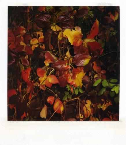 autunno,natura,il bel paese,piante,foglie,colori,pioggia,umidità,sottobosco