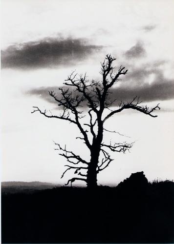 L'albero di Giuda - G.F.G. Liminare 206 (Anni 70).jpg